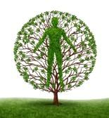 12668178-arbre-avec-des-branches-et-des-feuilles-vertes-en-forme-d-39-un-corps-anatomique-personnes-sur-blanc
